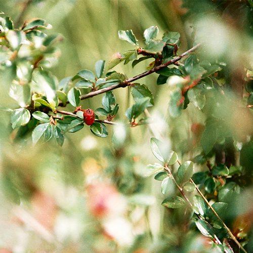 Im Wald und über Wiesen
